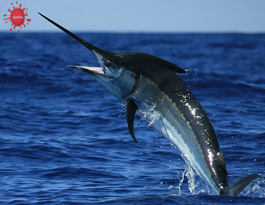 Fastest Animal on Land, in the Air and in the Sea